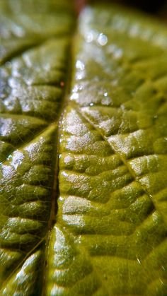 Leaf close up with a macro lens