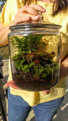 DIY 1 Gallon Rain Forest terrarium Kit by MossyLittleShop on Etsy