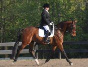 Eye Candy with talent to back it up. 2007 Hanoverian gelding with expressive, quality gaits. A perfect gentleman and always forward thinking. Talented for the professional with rideability for your Young Rider or Adult Amateur. $65,000