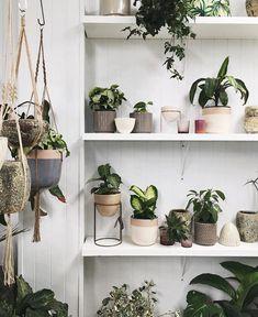 #plantstore