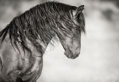 lisa dearing PHOTOGRAPHY | Wild Horse & Fine Art Equine Photography - King of Sulphur Springs