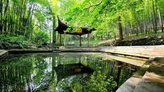 nature, Landscape, Architecture, Building, Asian Architecture, China, Pagoda, Water, Trees, Forest, Lake, Reflection, Leaves HD Wallpaper Desktop Background