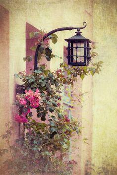 Фотообои чайные розы 2614