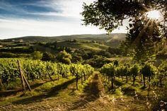 di Enio Bravi Vai a galleria foto di Toscana