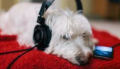 5 Podcasts That Will Make Your Workout Fly