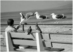 Los Angeles, gabbiani, mare, solitudine