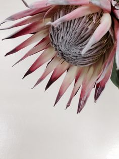 Protea I'm in love Flor Protea, Protea Art, Protea Bouquet, Protea Flower, My Flower, Flower Art, Cactus Flower, Tropical Flowers, King Protea