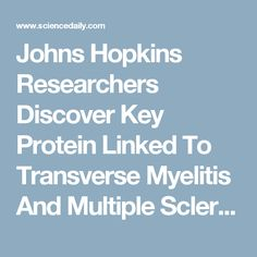Johns Hopkins Researchers Discover Key Protein Linked To Transverse Myelitis And Multiple Sclerosis -- ScienceDaily