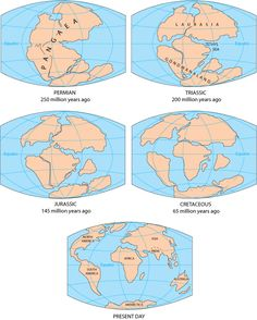 The breakup of the Pangaea supercontinent. <br />