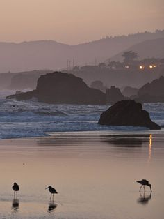 Sunset, Bodega Bay, CA by Rich Anderson, via Flickr