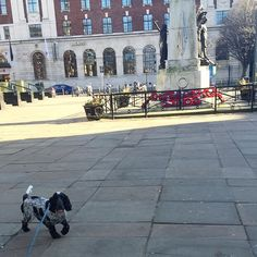 City Dog! #cockerspaniel #leeds #citydog