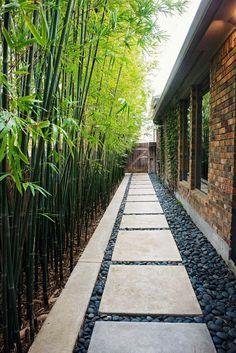 Hinterhof Trittsteine Gehweg und Bambuspflanzen als Zaun # . backyard stepping stones walkway and bamboo plants as a fence Hinterhof Trittsteine Gehweg und Bambuspflanzen als Zaun Side Yard Landscaping, Cheap Landscaping Ideas, Walkway Ideas, Side Walkway, Modern Landscaping, Landscaping Rocks, Sideyard Ideas, Pergola Ideas, Florida Landscaping