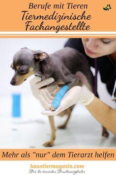Du wünschst dir einen Beruf mit Tieren? Dann ist der Beruf der tiermedizinischen Fachangestellten vielleicht genau das richtige.   #htm #haustiermagazin #berufemittieren #tierarzt #hund #katze #maus Animal Clinic, Dog Cat, Funny Cat Pics, Animal Shelter, Vet Office, Training