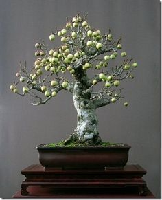 apple tree with its tiny edible apples from bonsai artist Walter Pall. Be a bonsai artist Bonsai Tree Types, Bonsai Plants, Bonsai Garden, Bonsai Trees, Bonsai Apple Tree, Mini Bonsai, Tree Garden, Succulents Garden, Air Plants