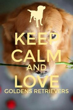 Keep Calm and Love Golden #GoldenRetrieverPuppy