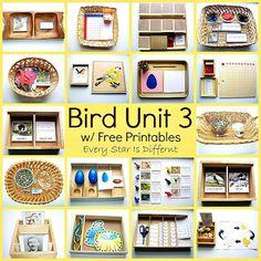 Montessori Bird Activities and Free Printables for Kids