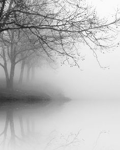 Winter Tree Reflections by Nicholas Bell, Photograph | Zatista
