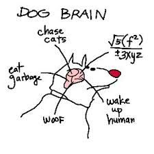 Cerebro de perro