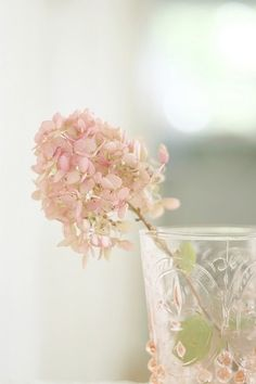 One perfect Hydrangea paniculata blossom in a pink Depression Glass tumbler My Flower, Pink Flowers, Beautiful Flowers, Simply Beautiful, Shabby Flowers, Glass Flowers, Cactus Flower, Beautiful Gorgeous, Flowers Garden