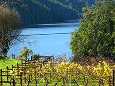 En route to Cradle Mountain, Lake Barrington Vineyard Mountain Range, Tasmania, Continents, North West, Vineyard, To Go, Southern, Australia, Island