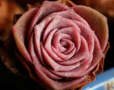 Greenovia Aizoon hairy mountain rose rare succulent 10 seeds - Succulents Plants - Ideas of Succulents Plants
