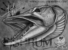 The musky (Esox masquinongy) is one of the largest predatory fish, endemic to North America. Although it's range is relatively small on the grand scale of things, the musky holds a large following with myth and legend. They are the king in their home waters. #fish #fishing #musky #skull #skeleton #nicklaferriere #drawing