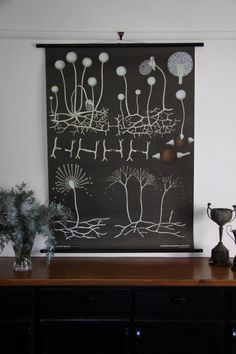 Funghi botanical wall chart, maybe for kitchen?
