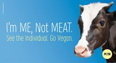 There are so many reasons not to eat cows, but here are our top 10.
