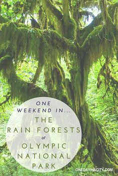 The temperate rain forests in Olympic National Park in Washington are incredibly green and lush. From the visually amazing Hall of Mosses in Hoh Rain Forest to the centuries old rain forests bordering Lake Quinault, here's what to see with one weekend in the area.