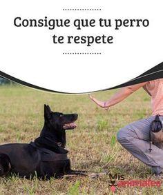 03515a1ea14a5 Consigue que tu perro te  respete Como te hemos comentado en diversas  ocasiones
