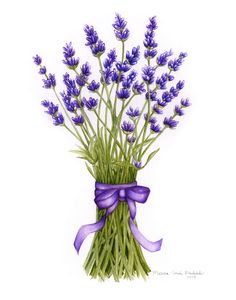 http://thecreativecall.net/resources/Marcia_LavenderBouquet_11x14.jpg
