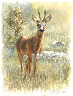 Chevreuil velours Chien Springer, Illustration Art, Illustrations, Small Art, Wildlife Art, Hunting, Moose Art, Creatures, Wallpaper