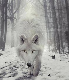 Why the Wolf- for the Women Who Run With Wolves Coaching Circle 2015 Wolf Totem and Spirit Animal. Wolf Totem, Spirit Animal Totem, Animal Totems, Beautiful Creatures, Animals Beautiful, Cute Animals, Wolf Symbolism, Animal Totem Meanings, Wolf Meaning