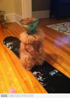 I dont think this kitty appreciates this very much
