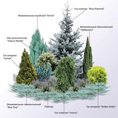 Evergreen Landscape, Small Garden Landscape, Evergreen Garden, Flower Landscape, Privacy Landscaping, Front Yard Landscaping, Garden Design Plans, Patio Design, Garden Deco