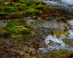 Trickle Down  8x10 Photo  Mountain Stream  Nature by Snaphappy72, $15.00