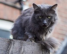 Cats make great pets but caring for them can be costly. Caring for a cat properly means providing it with…