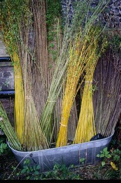 Willow - lovely mixed colours cut ready for basket weaving