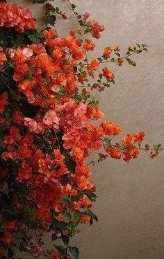 Brilliant fleurs corail d'automne. . .