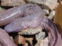 Resultado de imagem para serpentes e cobras