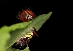 #macro #photography #caterpillar #nicography