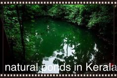 Natural ponds in Kerala  travel Kerala # tourism in Kerala # best Kerala holiday packages