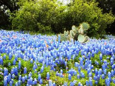 Texas hill country in the spring