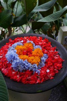 Welcome Flower in Ubud, Bali Welcome Flowers, Ubud Indonesia, Bali Travel