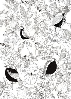 Birds & Botanics.   Katt Frank.