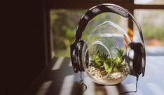 Η μουσική και η ανάπτυξη των φυτών http://ift.tt/2ktncqJ