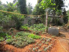 #kitchen_garden