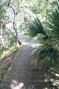 Hike a maritime forest or nature trail. Trails range from easy to moderate and offer markers to identify flora. The Bald Head Island Conservancy organizes several hikes throughout the year.