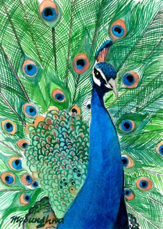 Peacock - watercolor by ©Anna Lee (Myounghwa) via Etsy