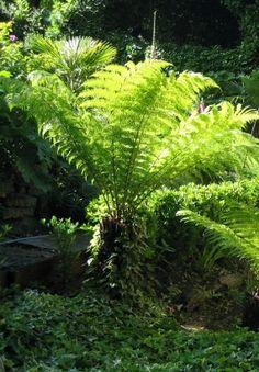 Les 14 meilleures images de jardins modernes   Bretagne, Creation ...